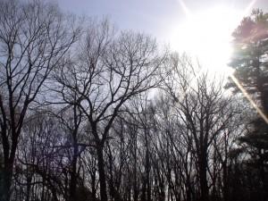Framingham, MA - spring litter layer, trees